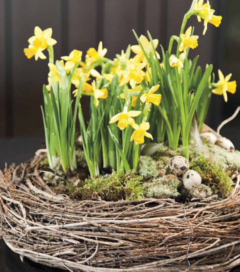 Zum Osterfest ein Osternest und vieles mehr