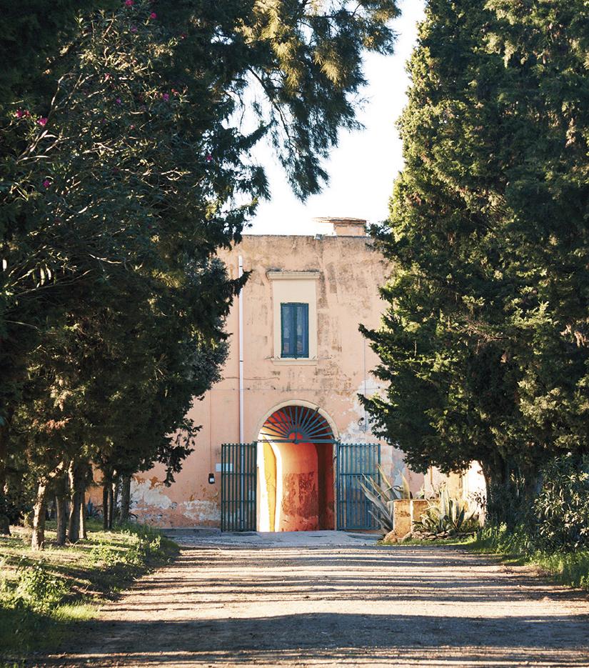 Tormaresca Calafuria Rosato – Weingut Antinori | Italien
