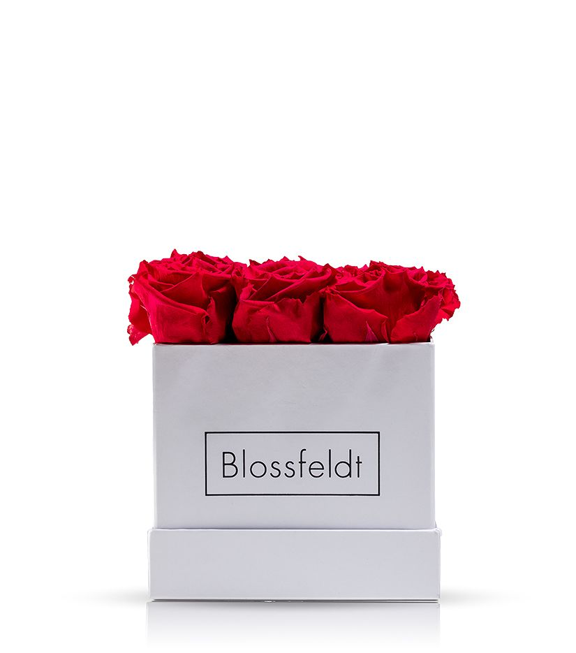 Rosenbox Quadrat (weiß) - verschiedene Rosenfarben