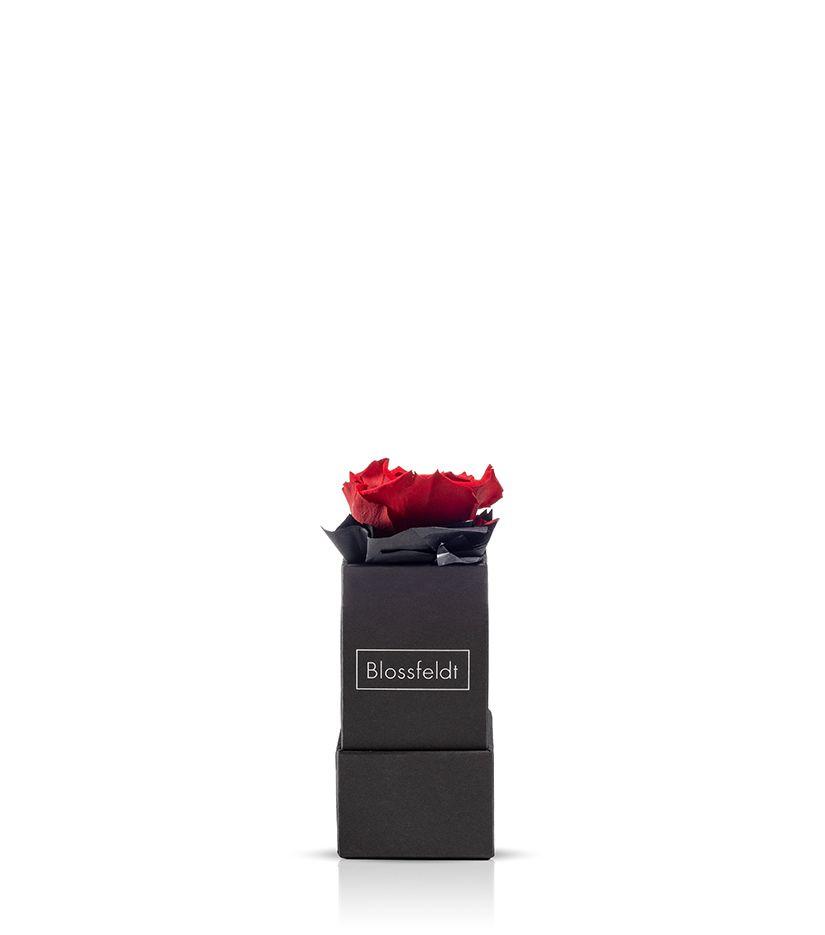 Rosenbox (schwarz) Größe XS - verschiedene Rosenfarben